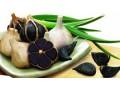 Lợi ích của tỏi đen với sức khỏe con người